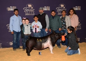 Texas Elite Gilt Showcase Results